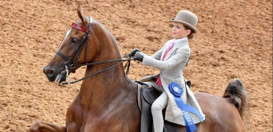 The Show Shop - SADDLE SEAT CONSIGNMENT RIDING APPAREL